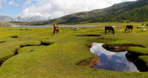 Pozzines du lac de Nino
