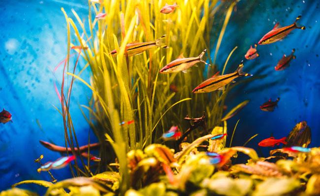 combien coute un aquarium